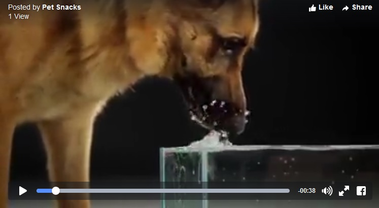 slow motion dog drinking